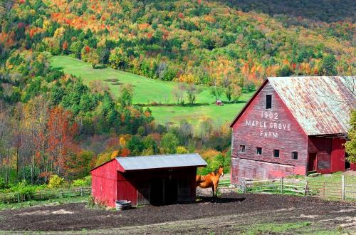 Maple Grove Farm