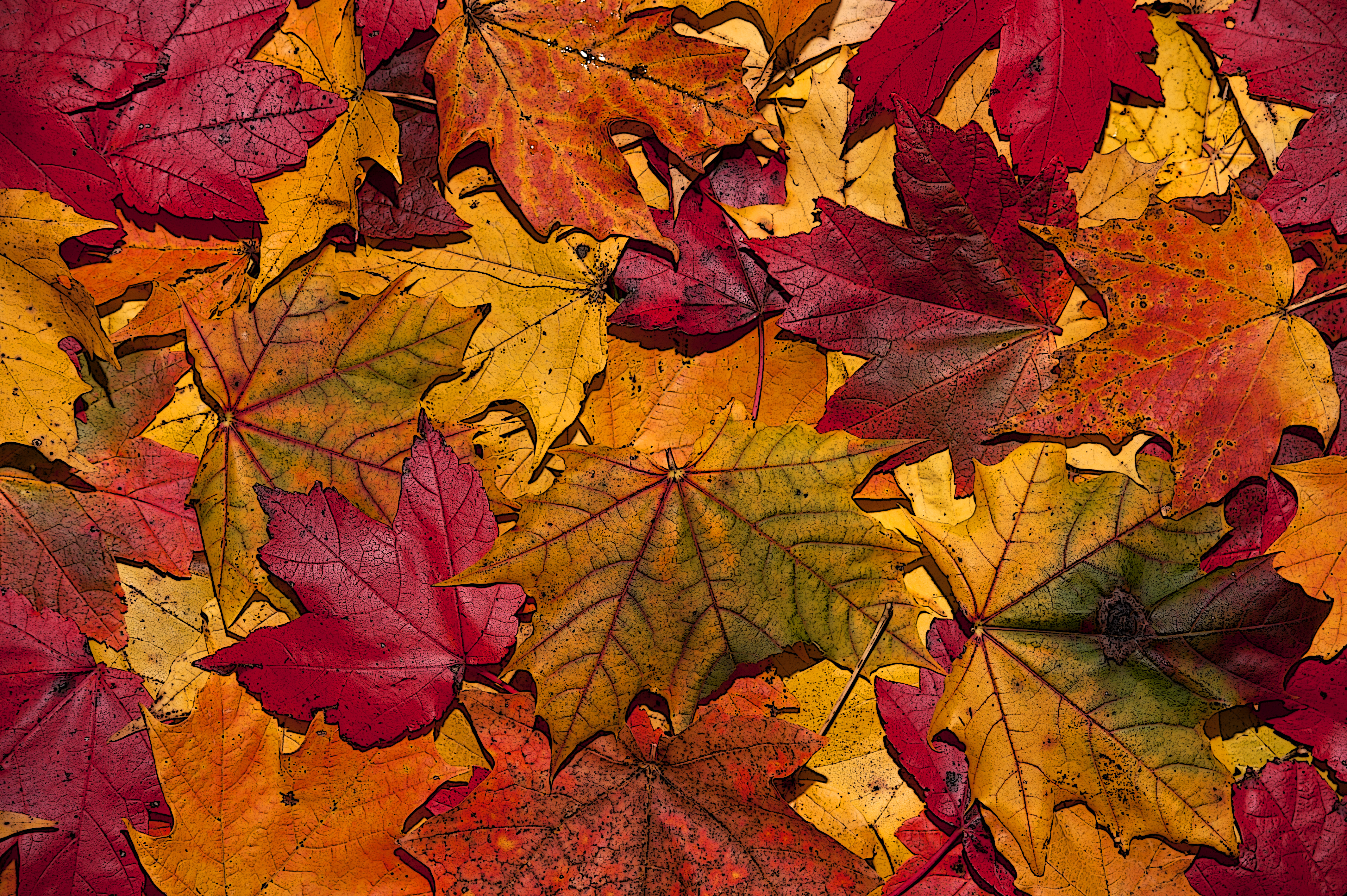 Autumn Leaves | Chasing the Light