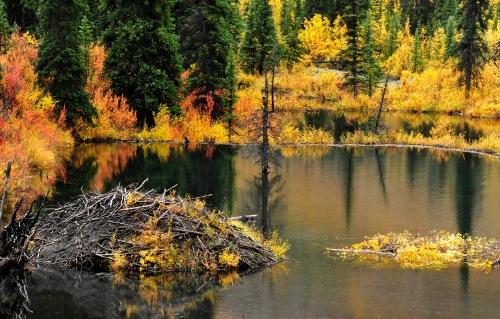 Yukon Beaver Pond