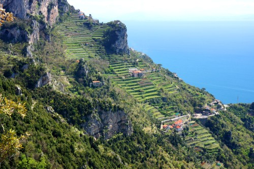 Terraced Vineyards