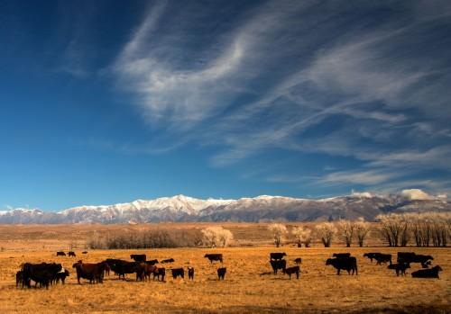 Bishop, CA ranchland